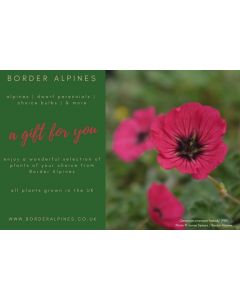 Border Alpines Gift Voucher (click photo above for more details)