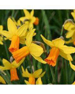 Narcissus_Jetfire